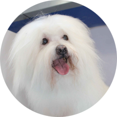 Glamour pets mobile dog grooming in toronto one on one attention solutioingenieria Gallery