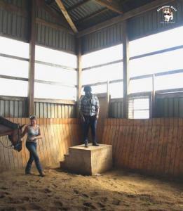 horse17