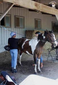 horse35